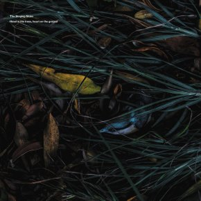 ALBUM REVIEW: The Singing Skies – Head In The Trees, Heart On TheGround